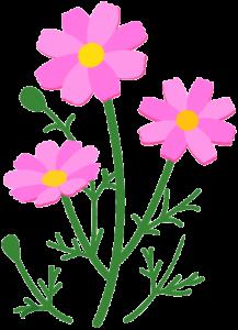 植物069