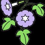 植物001