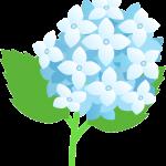植物064