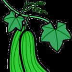 植物003