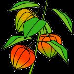 植物005